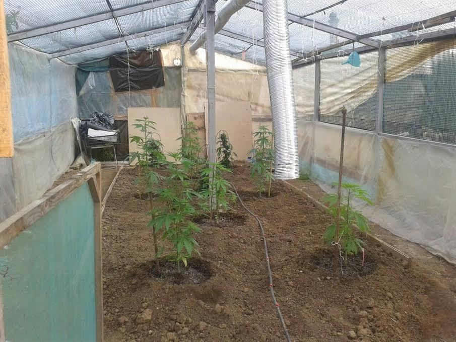 Συνελήφθησαν μητέρα και γιος σε περιοχή της Θεσσαλονίκης για καλλιέργεια και κατοχή κάνναβης