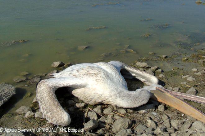 Φωτογραφίες από το μεγαλύτερο πουλί