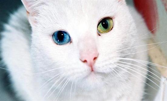 6a93b2394809 Oι γάτες βλέπουν τους ανθρώπους σαν μεγάλες γάτες και τους συμπεριφέρονται  αναλόγως.